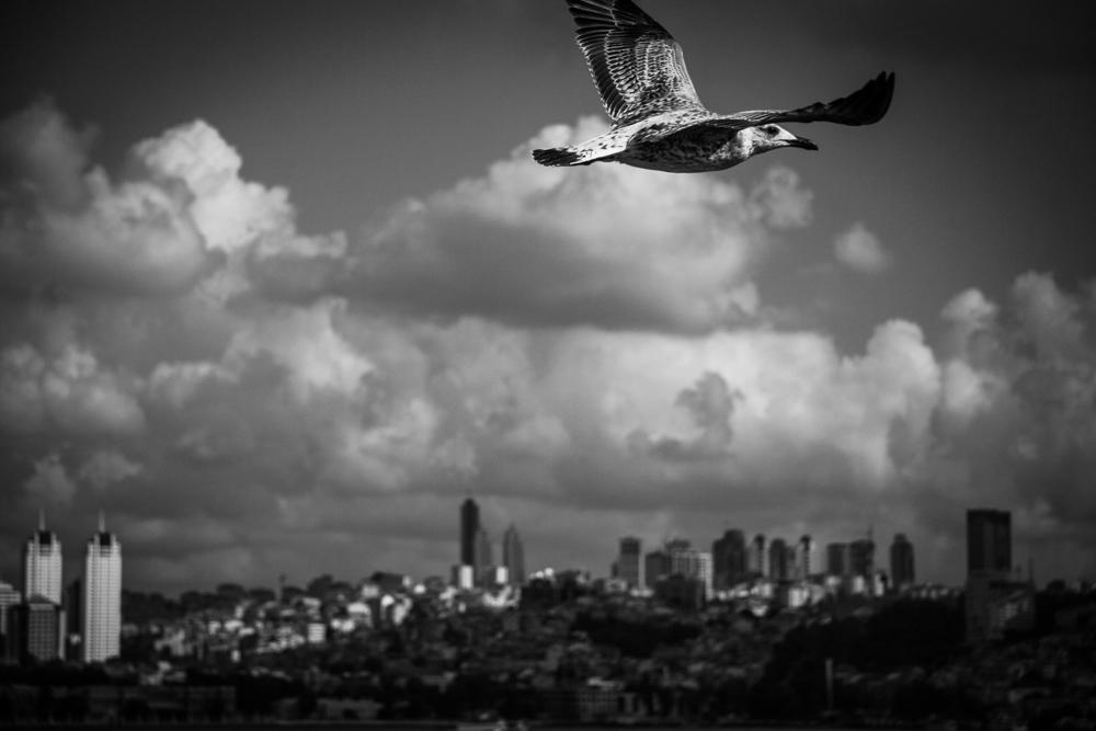 bird-above-city.jpg