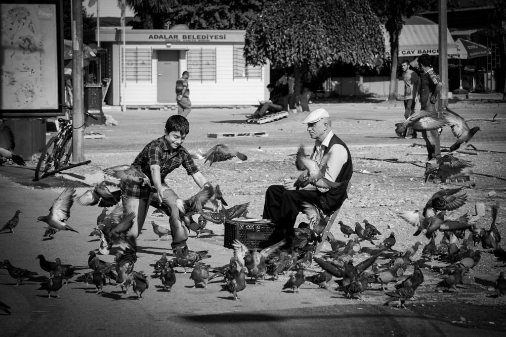 buyukada-birds.jpg