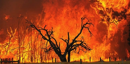australian-brush-fire web.jpg