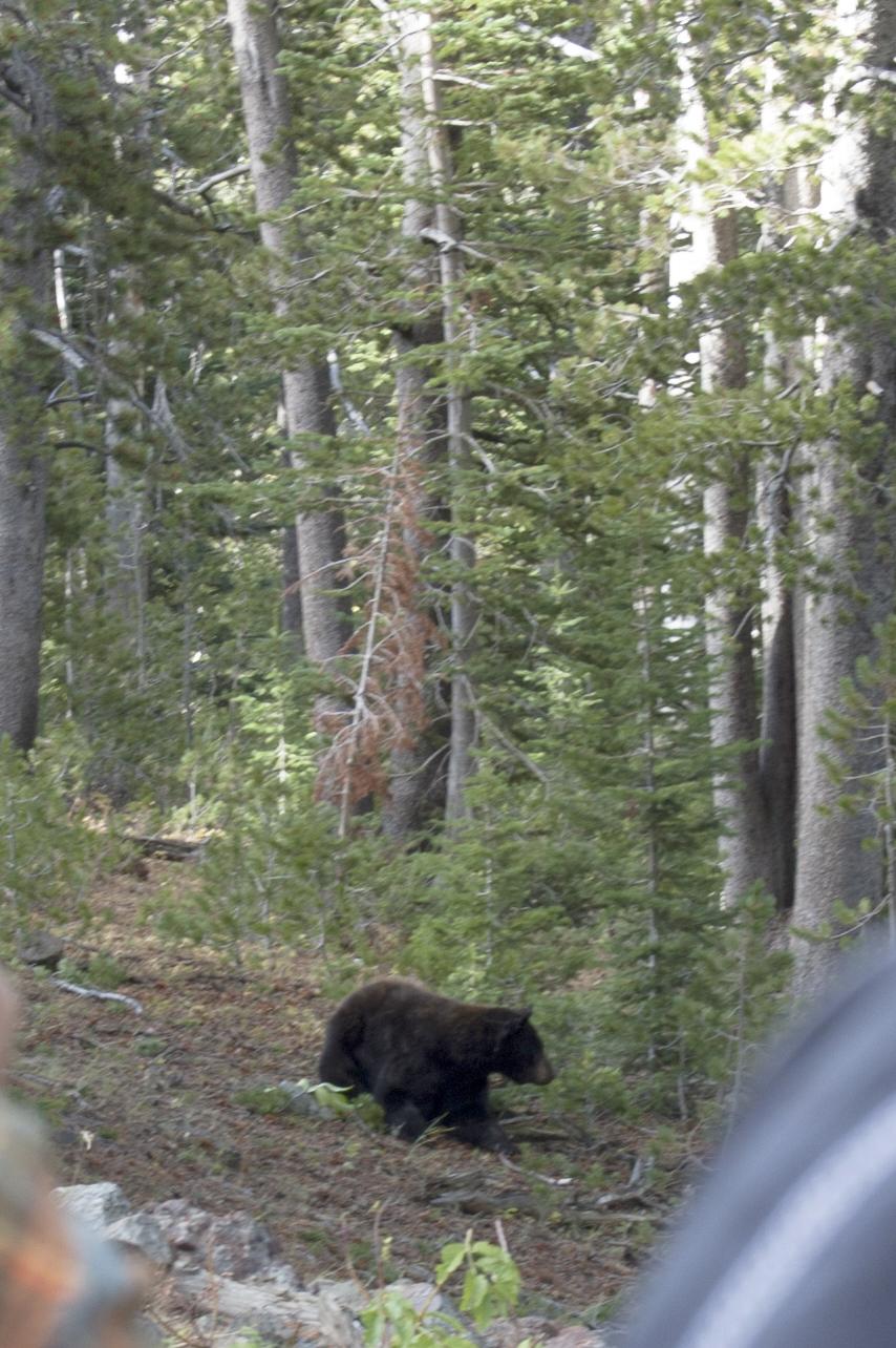 Oh, hello, bear!!!!