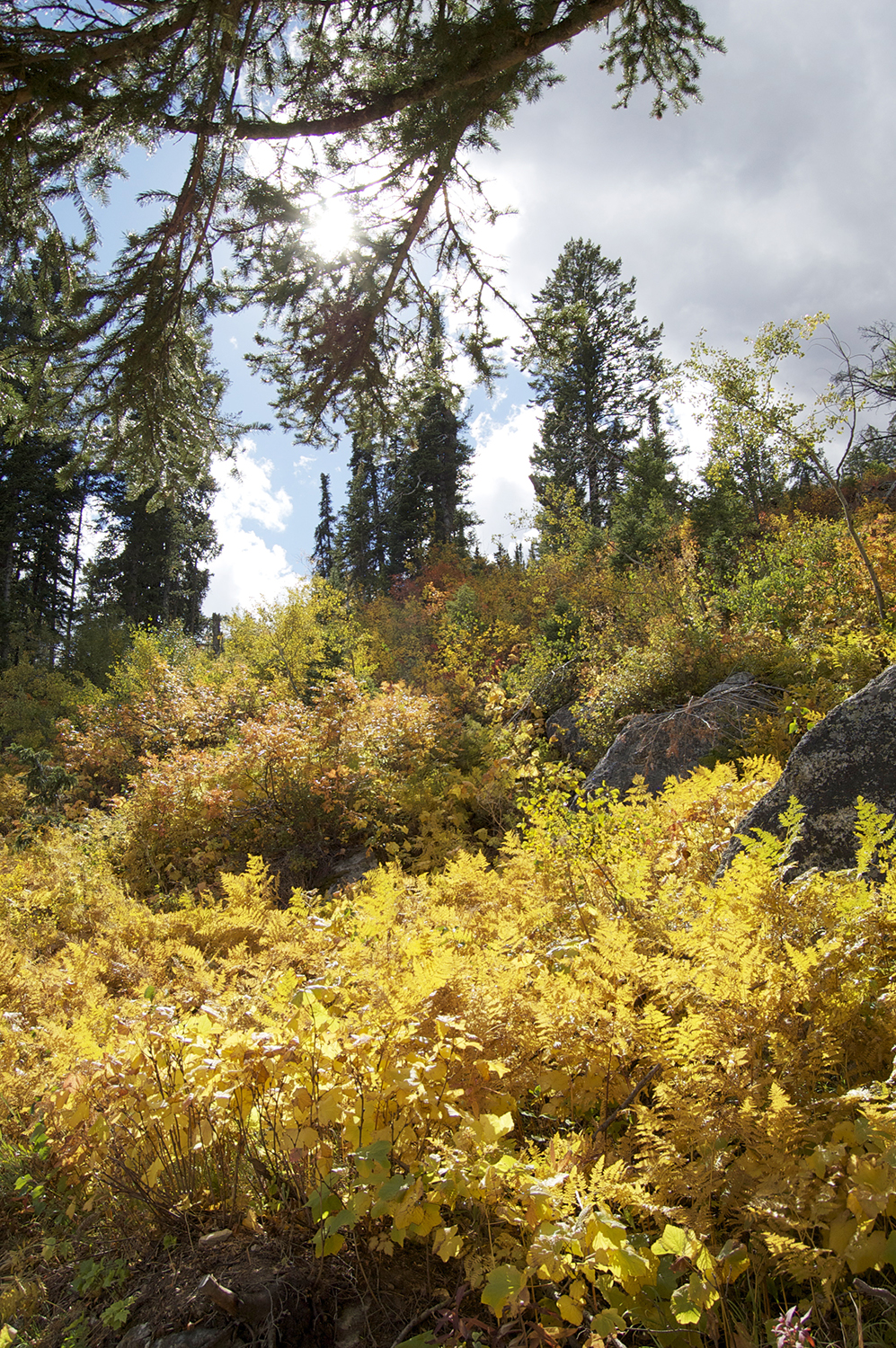 The sight elusive to Angelenos- fall color. (on the Jenny Lake hike)