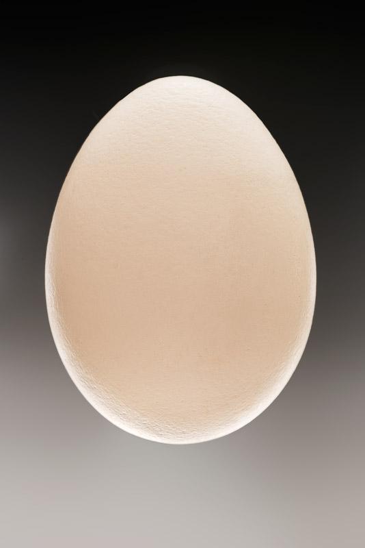 Egg-#3_DSC6308-HDR-6307-6311.jpg