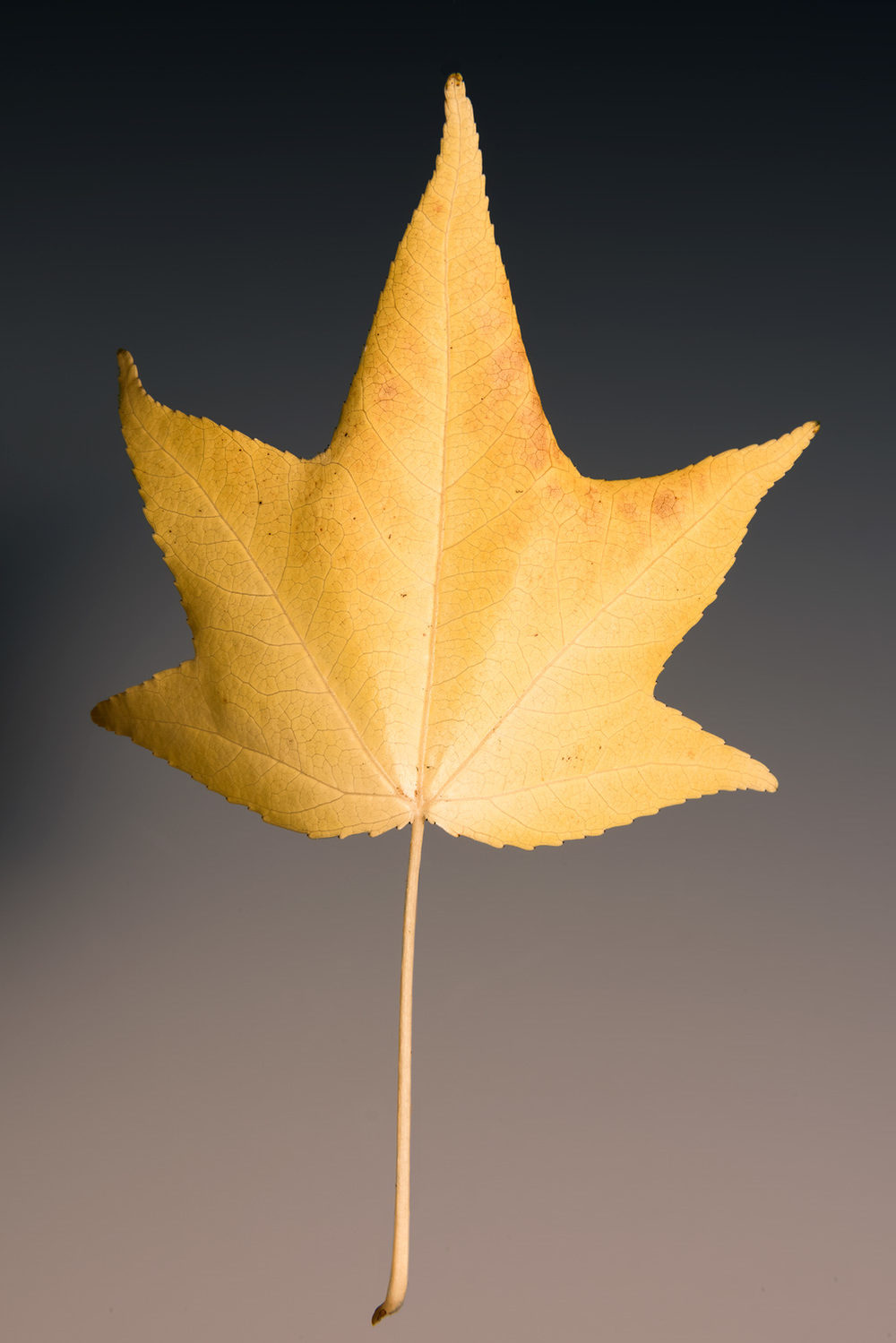 Yellow-Leaf-of-Vicksburg_DSC5853-HDR-5852-5856.jpg