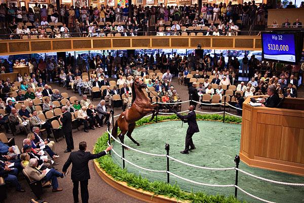 horse auction.jpg