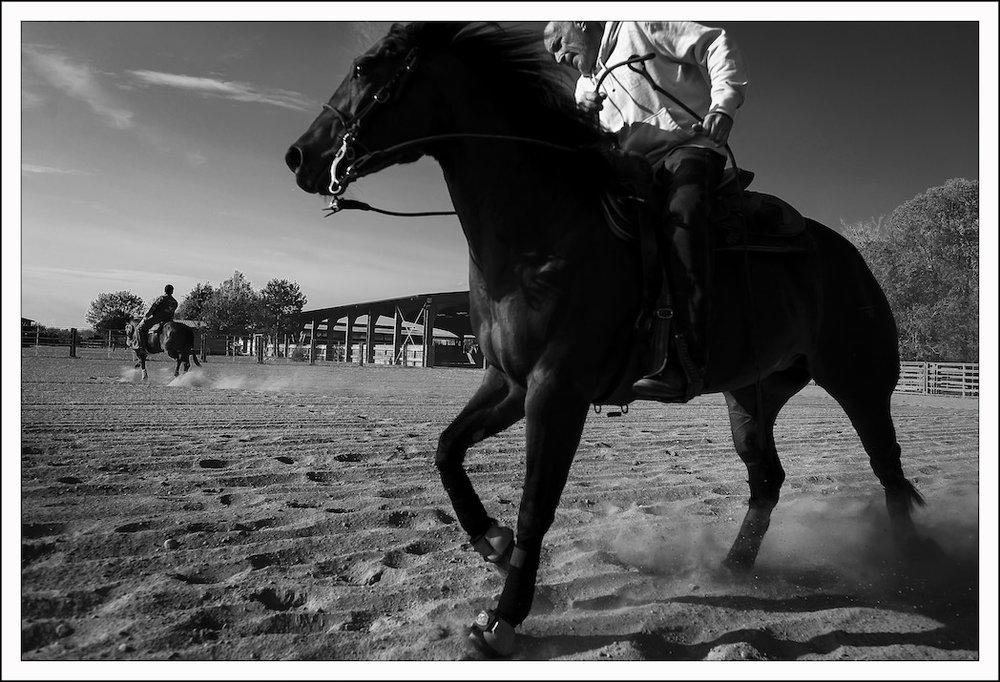 TAccia Ranch - performance Horses