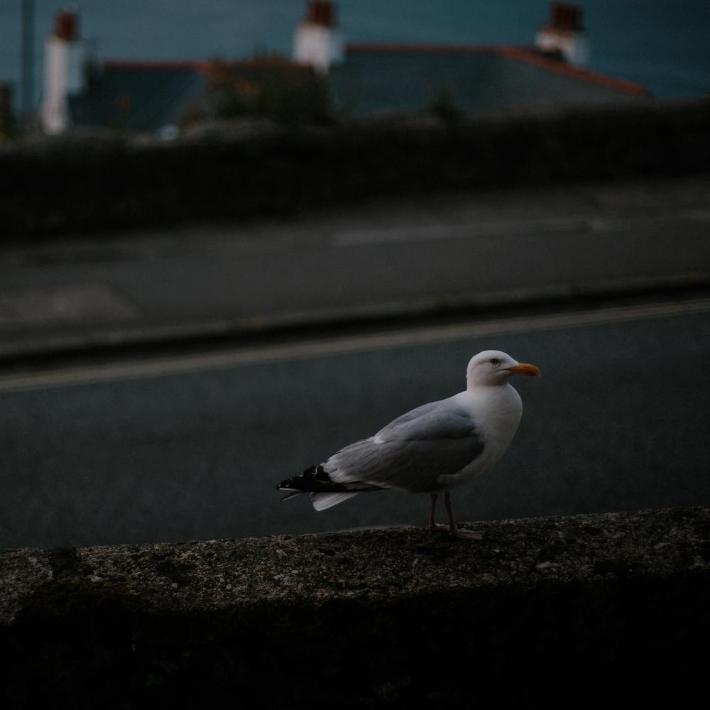 St Ives 2016-8.jpg