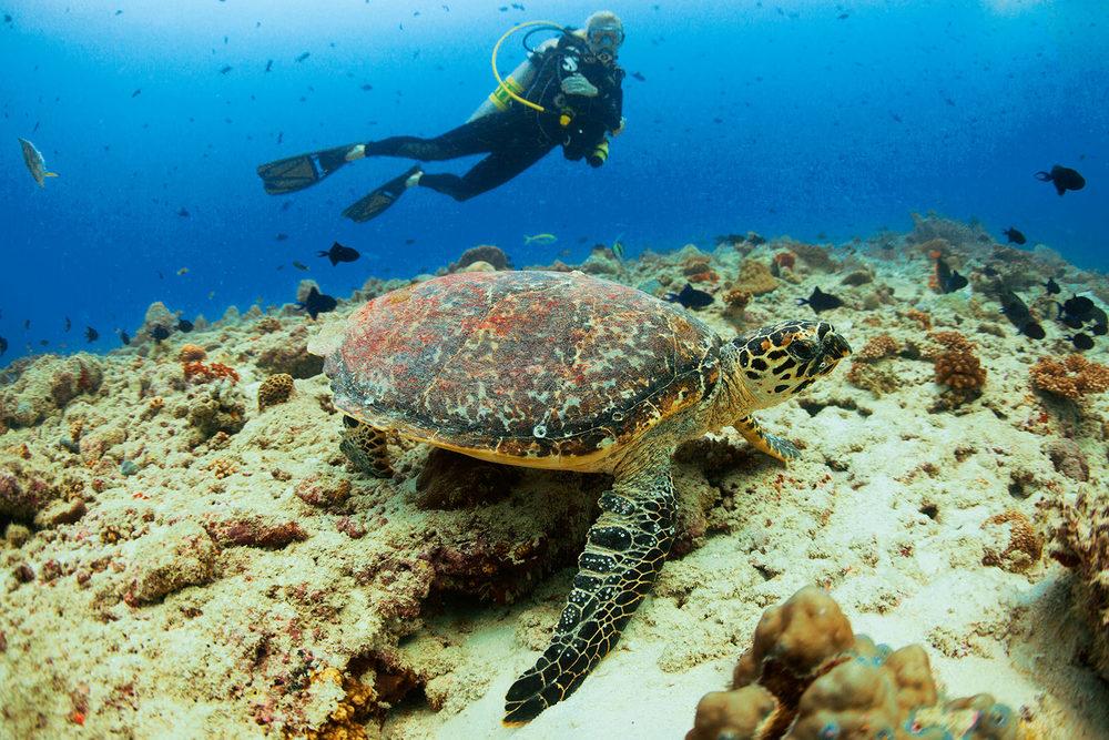 Maldivas</a>