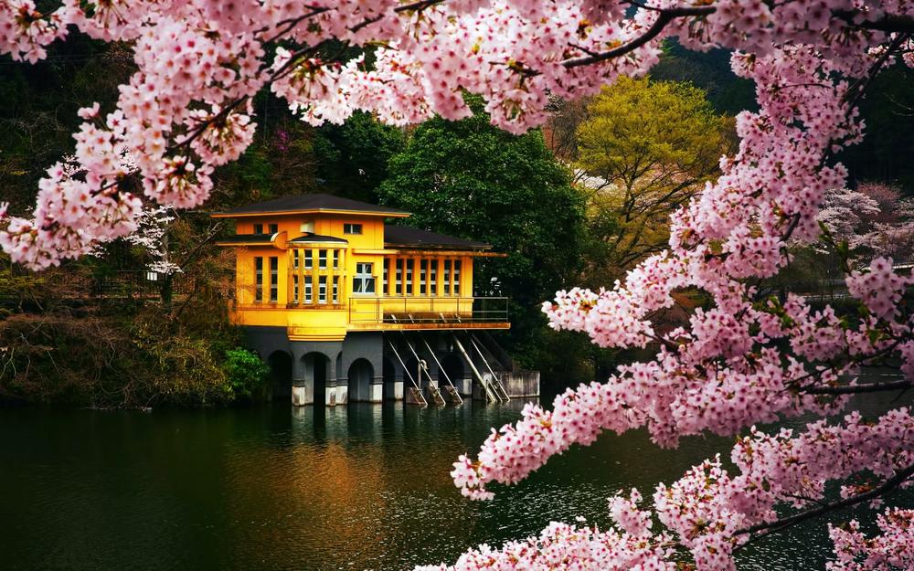 Japão</a>