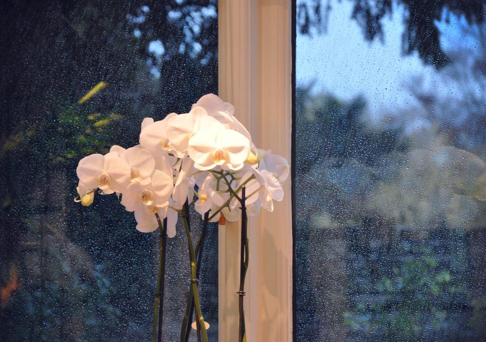 LeManoir Flowers
