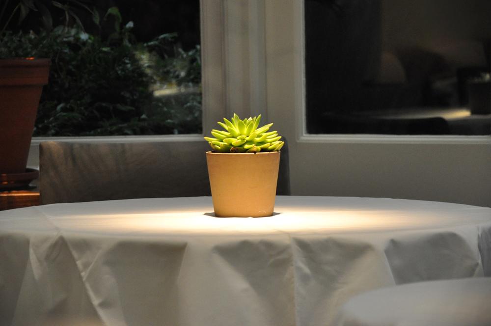 LeManoir Plant