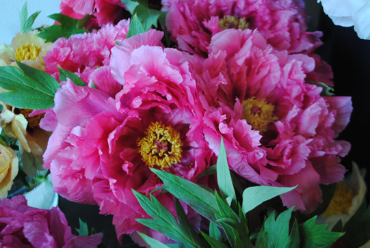 Sullivan-Owen-Philadelphia-Flower-School-Peony-2