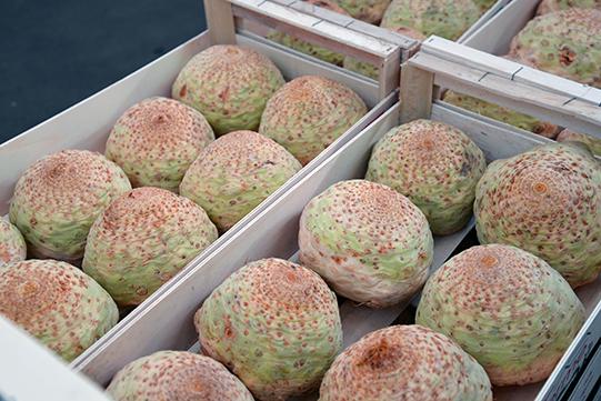 Sullivan-Owen-Melon-Rungis-Market