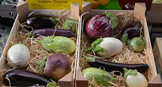 Sullivan-Owen-Rungis-Market-Eggplant