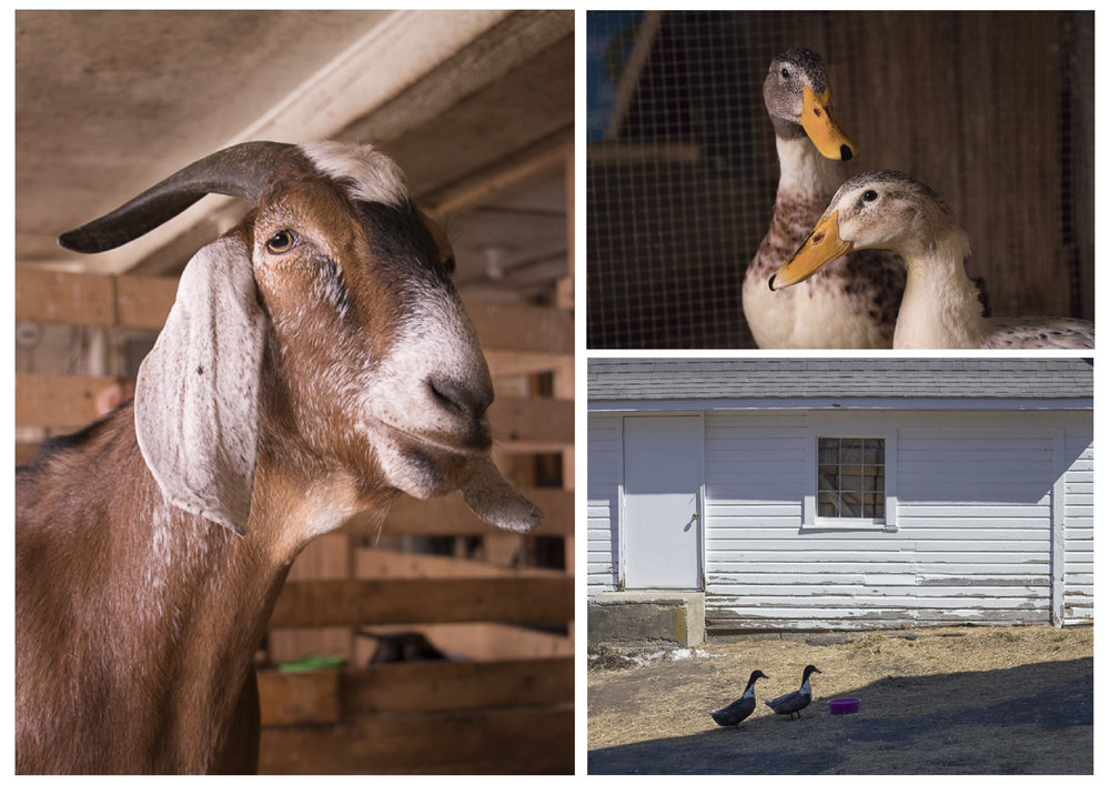 Maple Farm Sanctuary