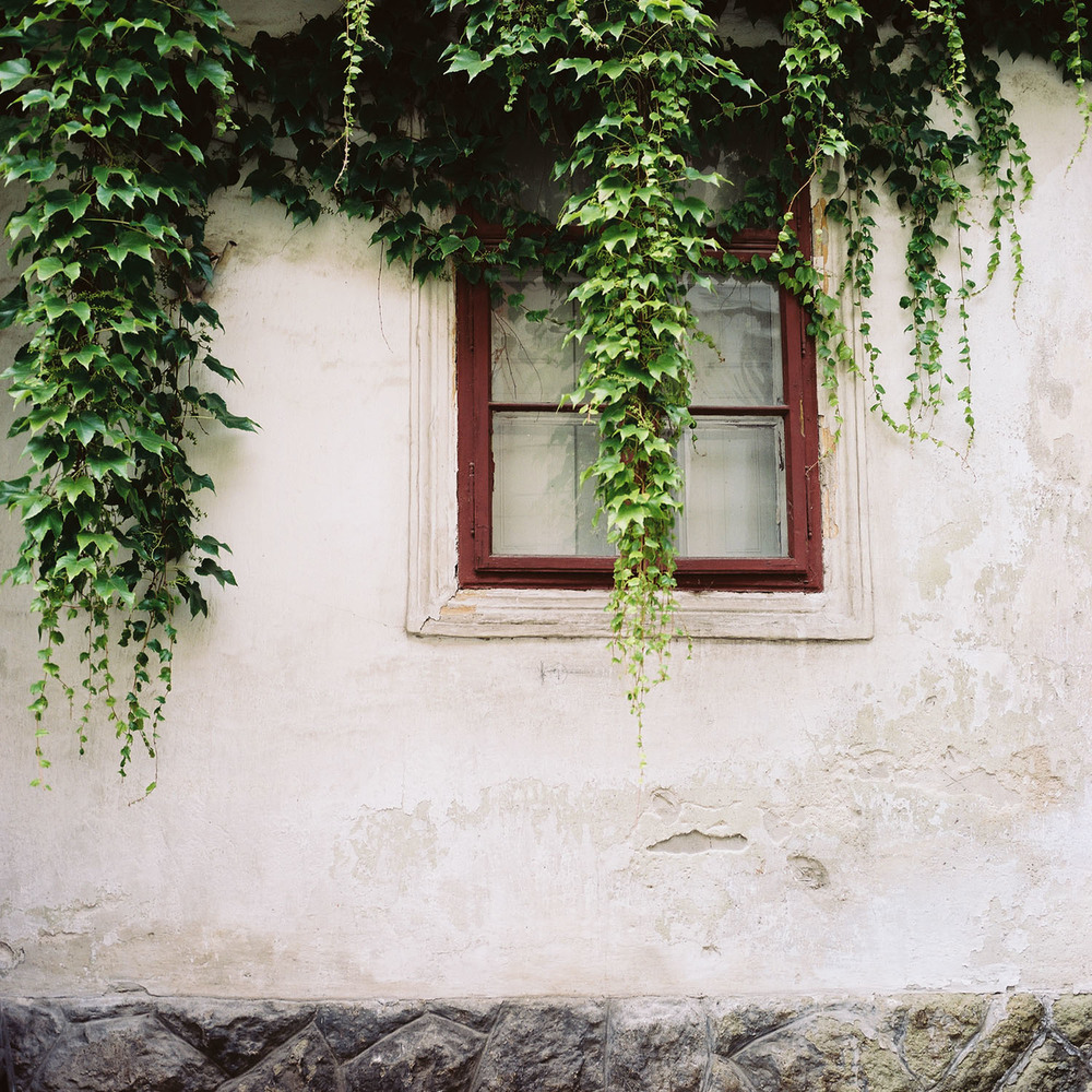"""Ivy Over the Window"""