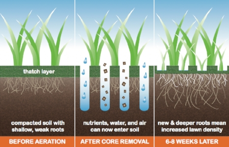 By simply removing these plugs of soil, nutrients, water and oxygen can significantly improve turf quality.