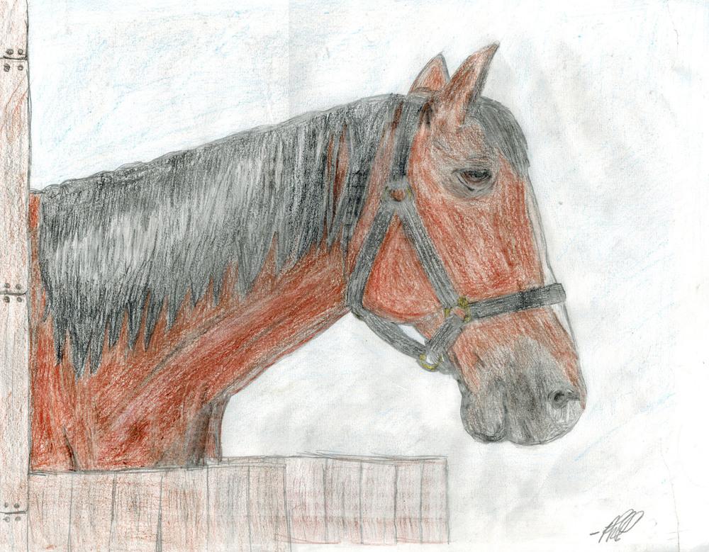 phil_horse1.jpg