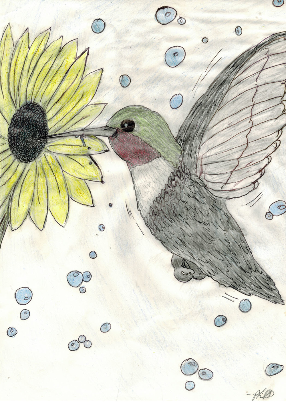 phil_hummingbird.jpg