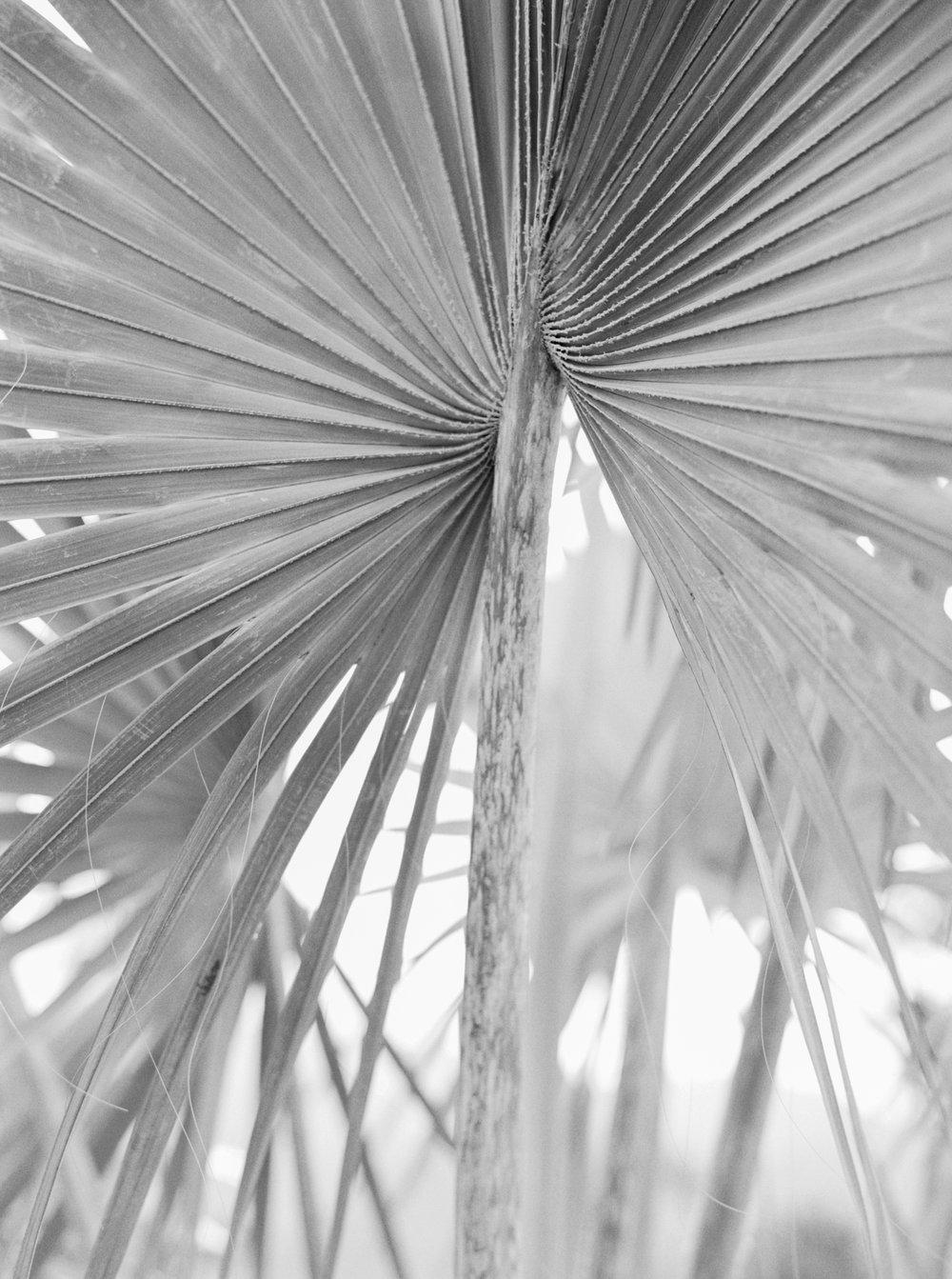 Palm leaf black white