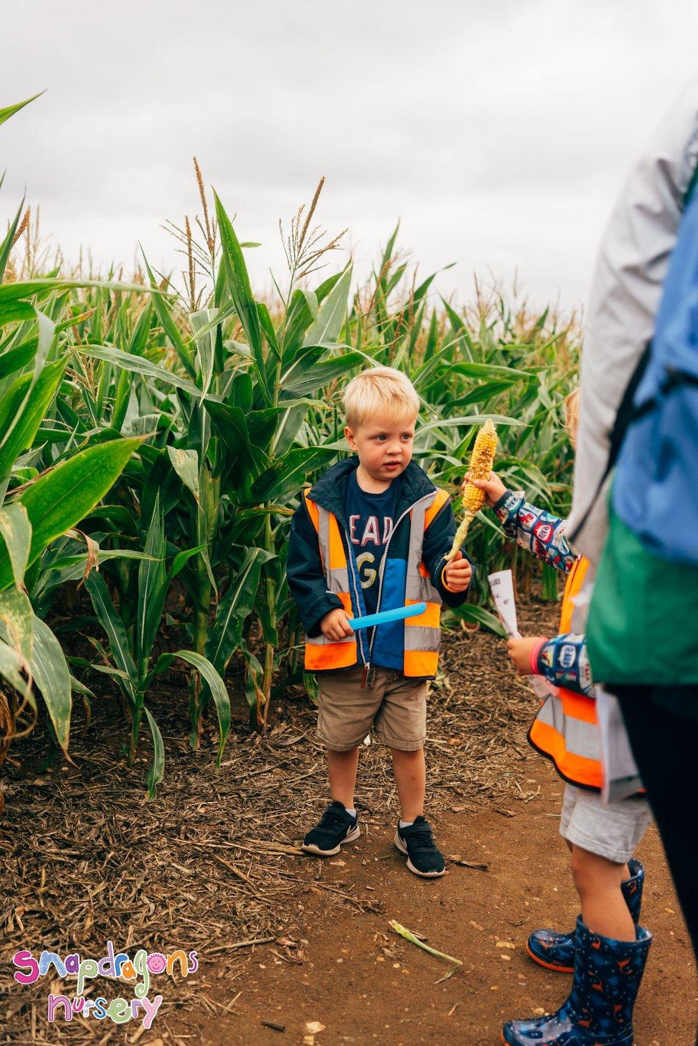 maize-maze-2018-08-21--2178-220902-041.jpg