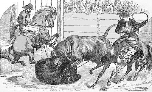 Bull and bear fighting was a popular pastime in William Richardson's day.