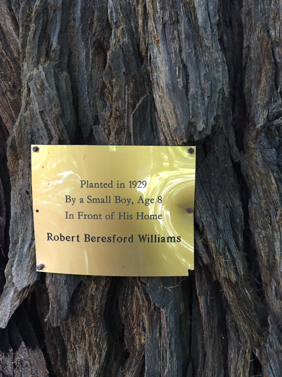 Redwood tree with official city plaque outside Williams' Sausalito Boulevard home Photo by Larry Clinton