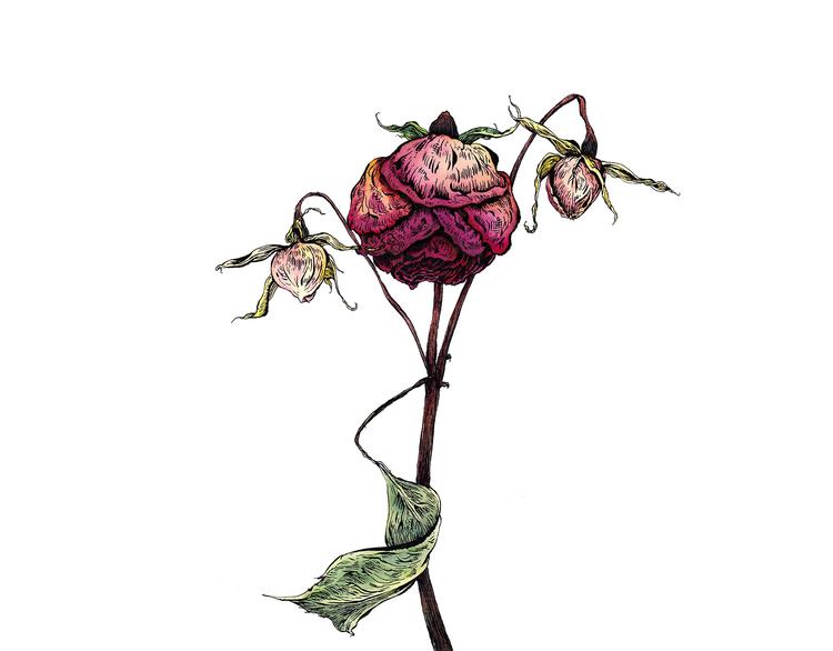 Dead Flowers Justin Francavilla