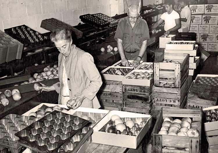 Robert and Mary Lott Packing Fruit in the 1960's
