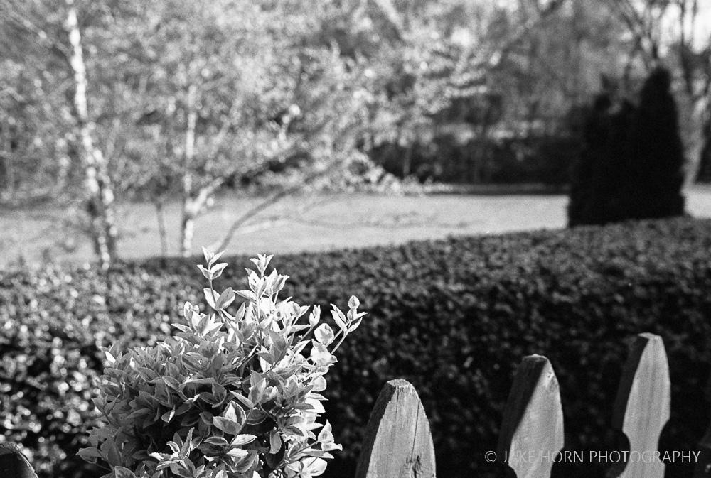 Leica M-A | f/2 | Arista Premium 400