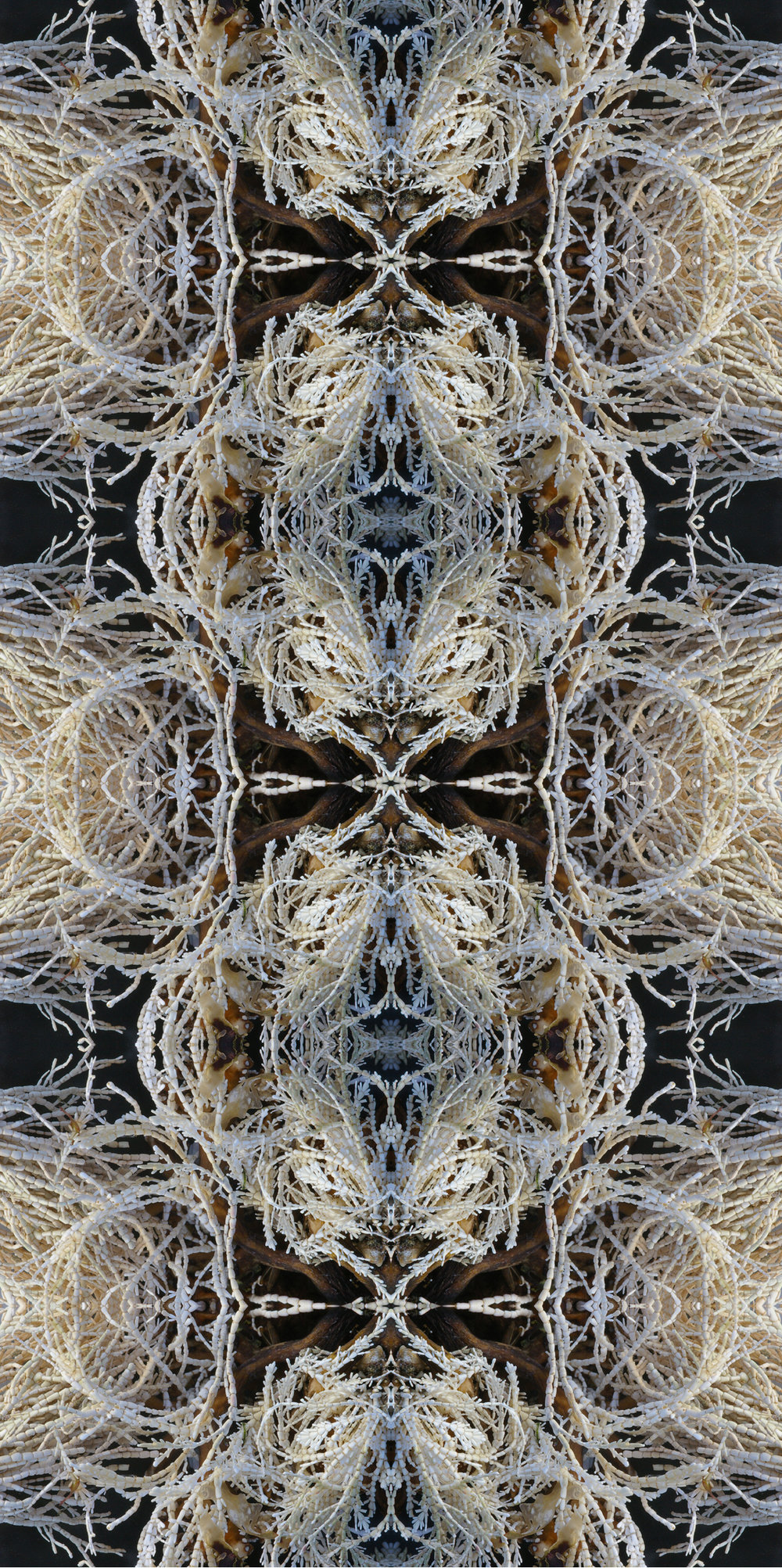 white lace seaweed.jpg