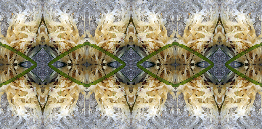 Cream Seaweed.jpgsm.jpg