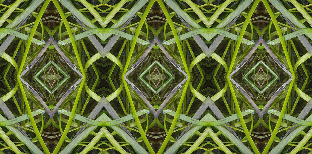 Seaweed pattern.jpg