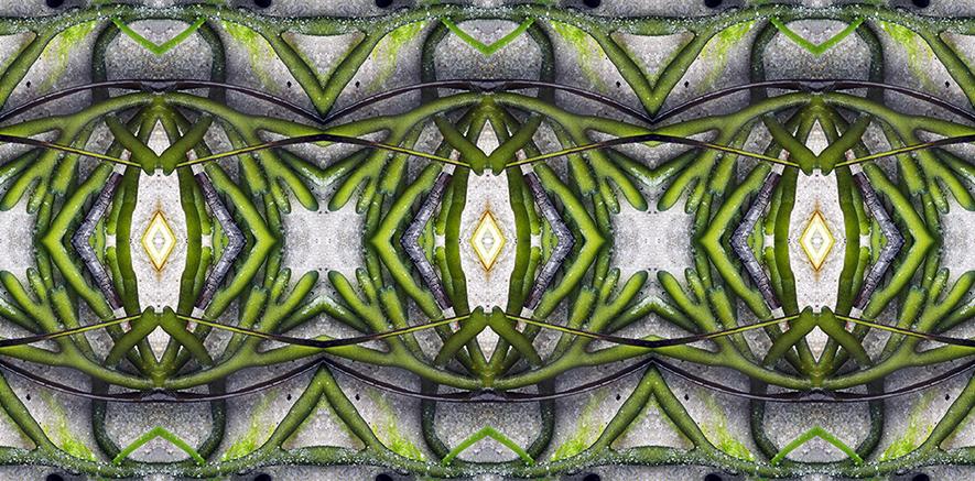 emerald Seaweed.jpgsm.jpg