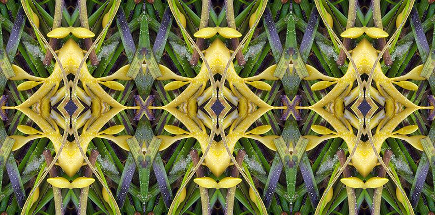 Temple Seaweed.jpgsm.jpg