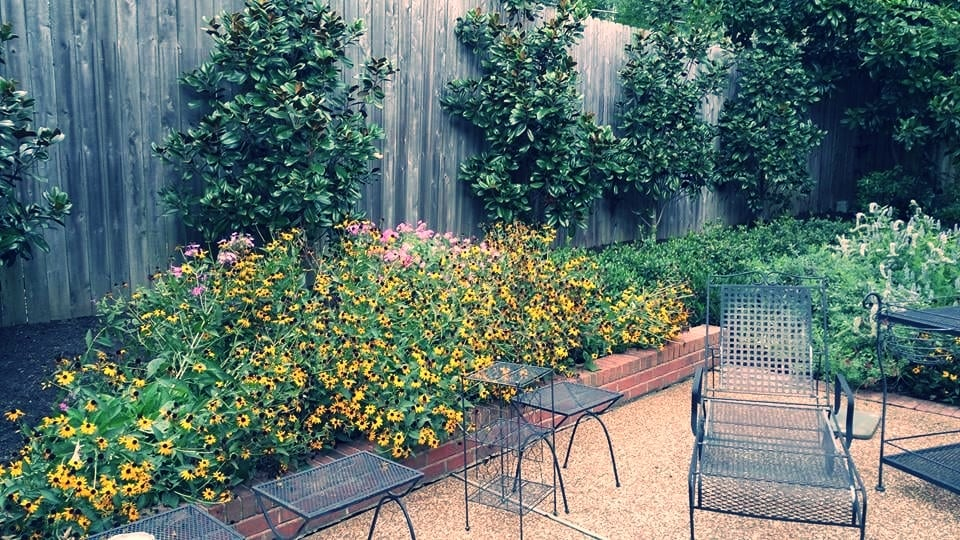 black eyed susan patio.jpg