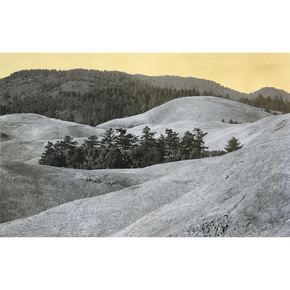 Cluster, Mount Tamalpais, California