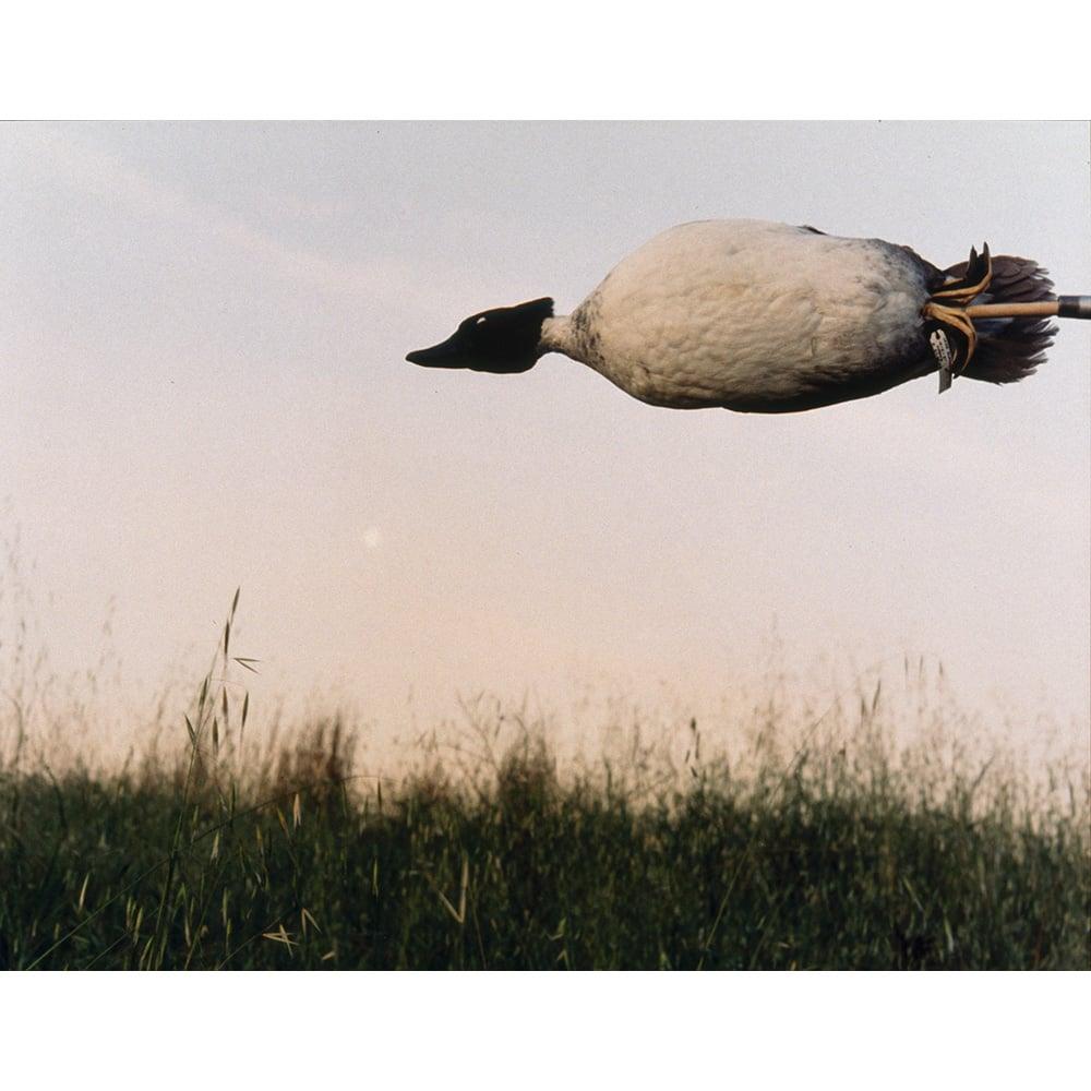 November, The Duck