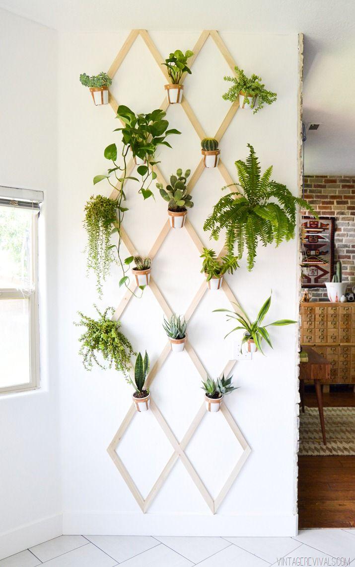 plant 8.jpg