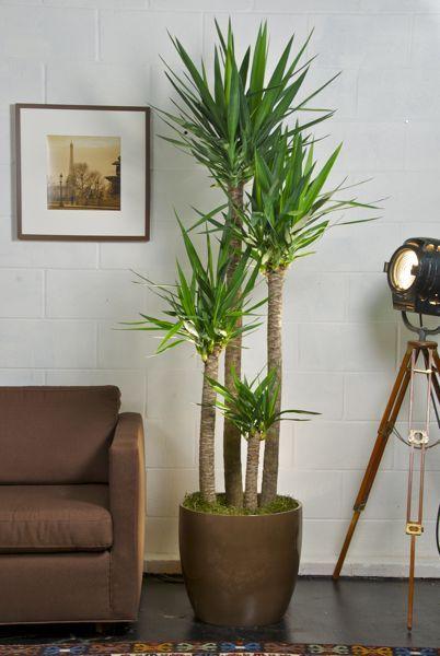 plant 10.jpg