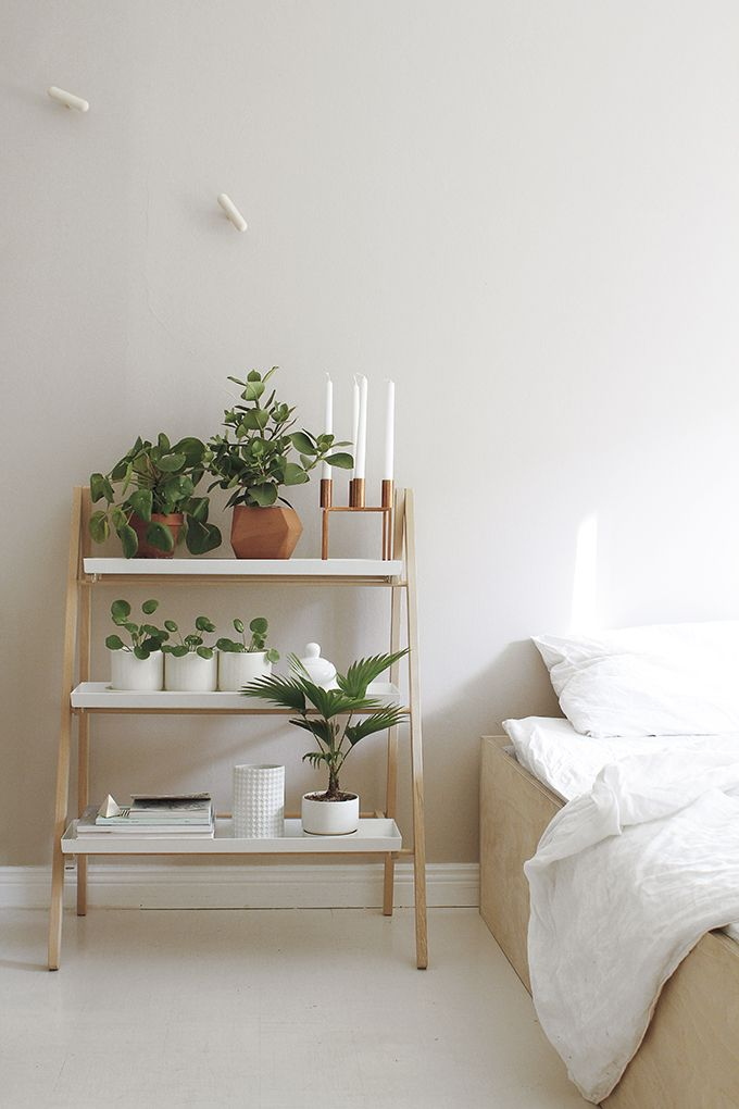 plant 11.jpg