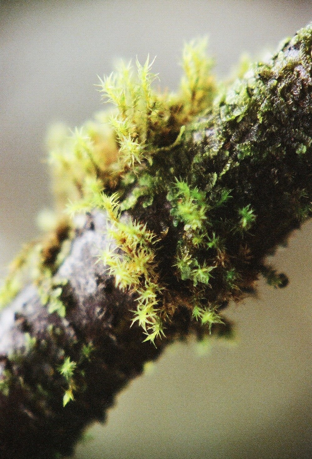 Moss on Tree 2   15.11 Fuji Pro 800