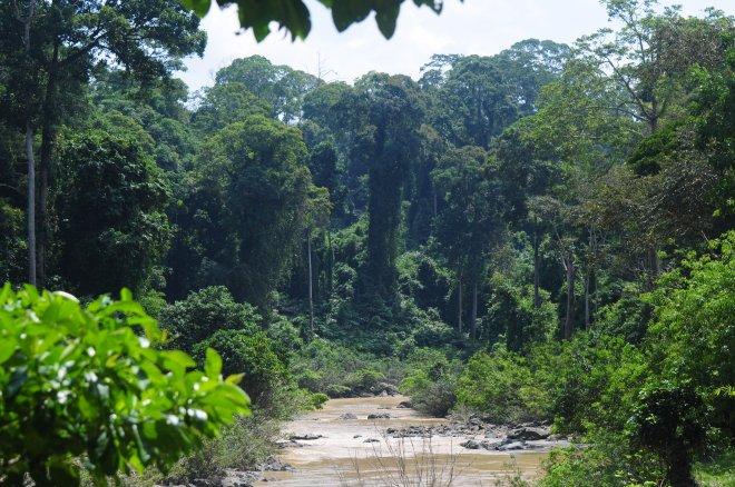 Danum Valley, Sabah Borneo