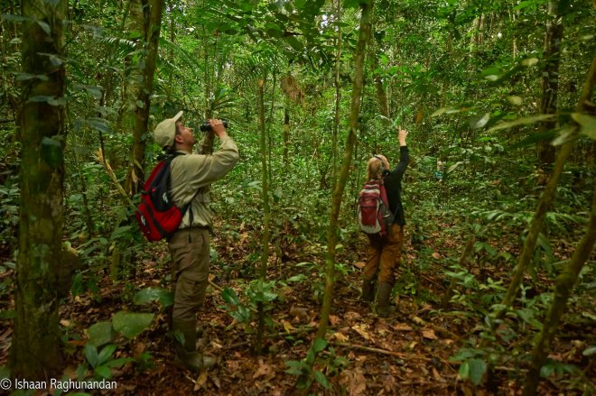 Students tracking habituated tamarin groups in southeastern Peru with field researcher Mrinalini Watsa through Field Projects International/PrimatesPeru. Photo credit: Ishaan Raghunandan
