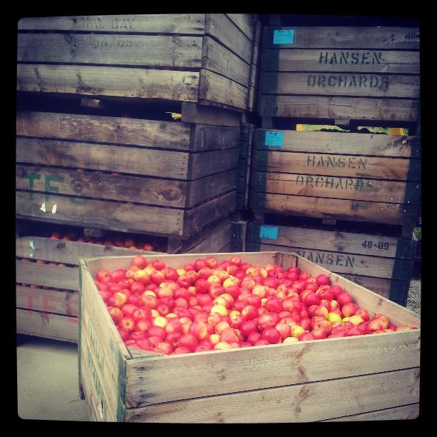 #williesmiths #organicappleorchard
