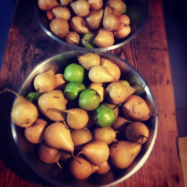 10kg of wild pears from Franklin, for an order of crostate this friday with @hugoandelsa and @ashergilding