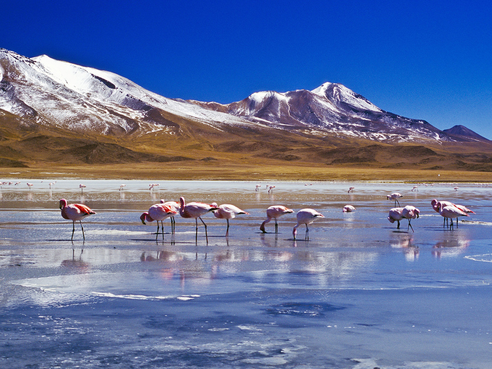 flamingoes__laguna_hedionda__bolivia.jpg