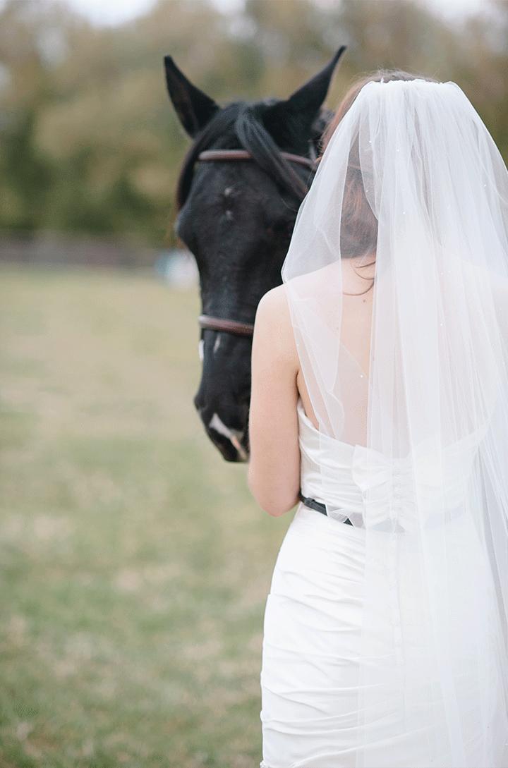 Equestrian-35