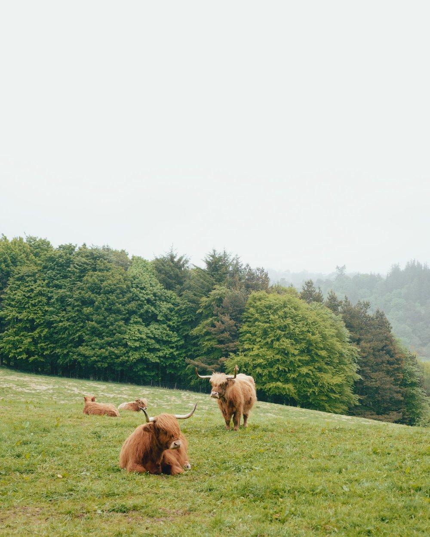 Macallan_day_three_twheat-09_preview.jpg