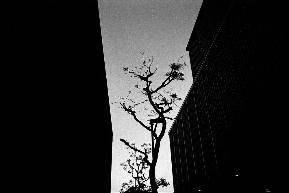 TOK05-HP5800-29b-copy.jpg