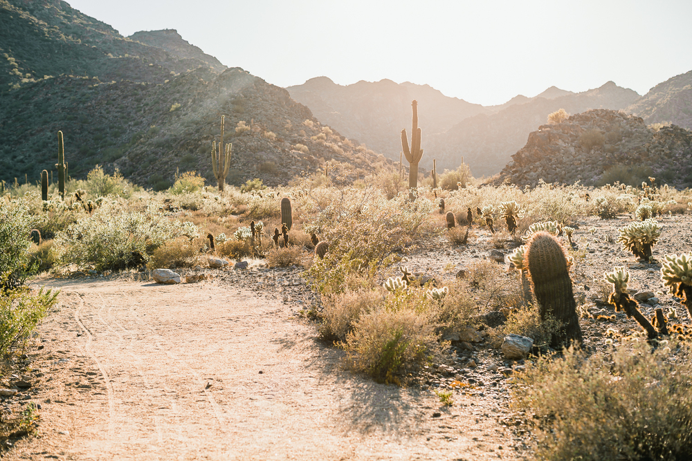 Arizona-Desert-Elopement-Emily-Kirke-Photography-4.jpg